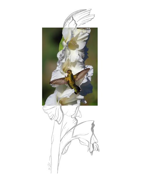 Ruby-throated-Hummingbird-2AM-104192_FINAL