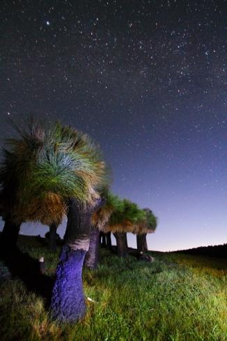 Grass Tree Lightpainting 2AM-112325_7D