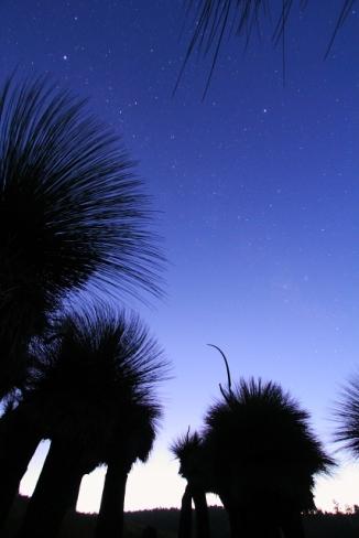 Grass Tree Lightpainting 2AM-112328_7D