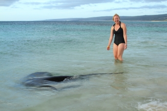 Smooth Stingray - Hamelin Bay 2AM-113560_7D