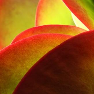 Succulent 2AM-112354_7D