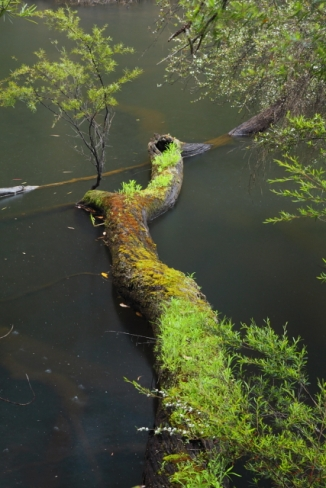 The Cascades - Lefroy Brook 2AM-112923_7D