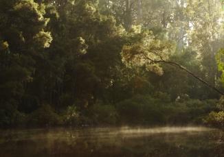 Warren River 2AM-112995_7D
