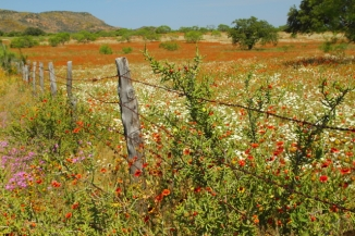 13_Wildflowers and Fence_Andrew McInnes-2AM-110506_small