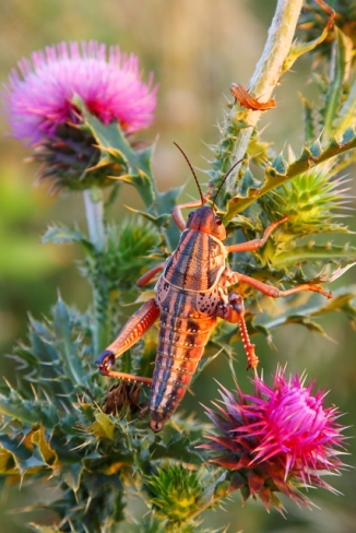 15_Locust and Thistle_Andrew McInnes-2AM-110423_small