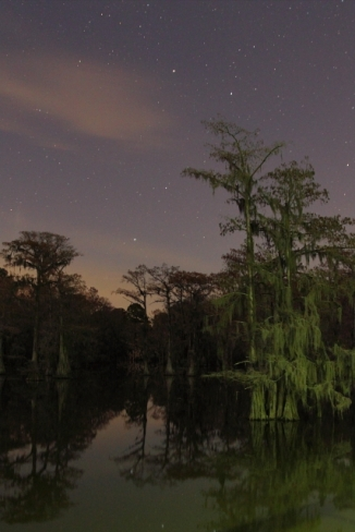4_Caddo Lake State Park_Andrew McInnes-2AM-114548_small