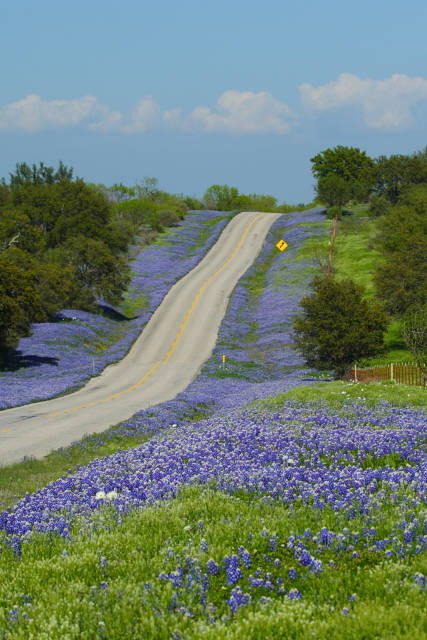 9_Bluebonnet Highway_Andrew McInnes-2AM-28665_small