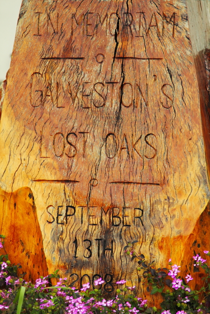 Lost Oaks Memorial 2AM-113926_7D_blog