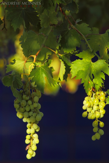 16_Hotham-Ridge-Winery-2AM-003905-7D