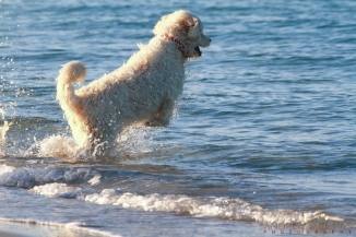 Dog-Beach---South-Beach-2AM-002163-EOS-7D