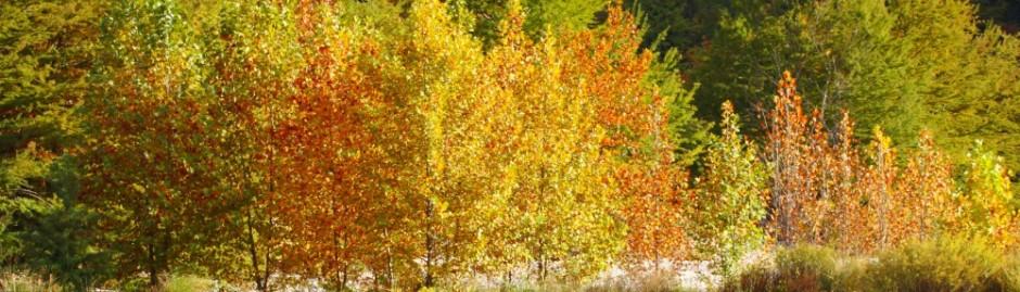 cropped-frio-river-2am-27558_30d.jpg