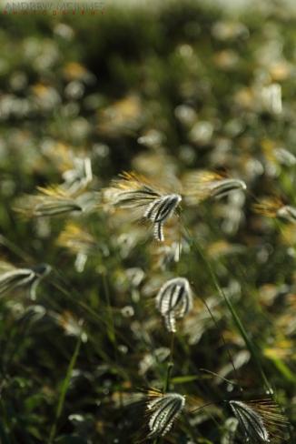 Grass-2AM-002958