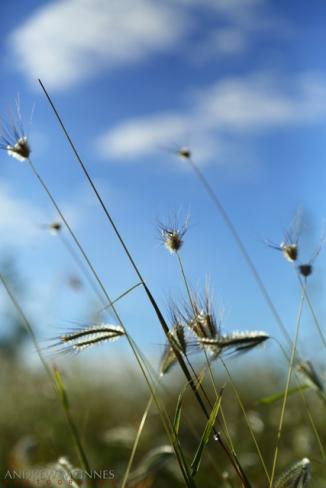 Grass-2AM-002960