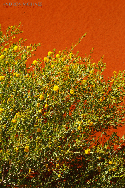 Red-Dune-and-Spinifex-2AM-002650