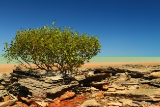 Roebuck-Bay_Broome-2AM-002753