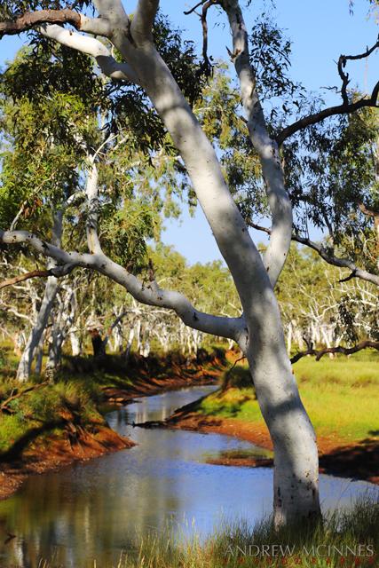 Toolunga-Creek-2AM-002677