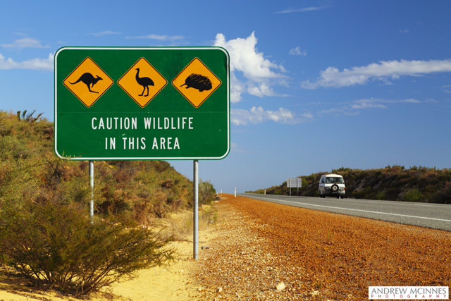 Wildlife-Sign-on-Highway-2AM-002144