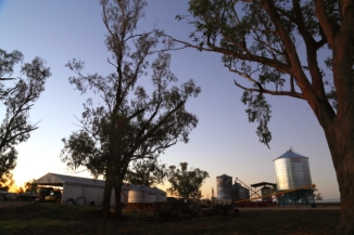 Silos and Trees 2AM-007898