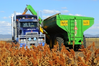 Sorghum Harvest 2AM-008001