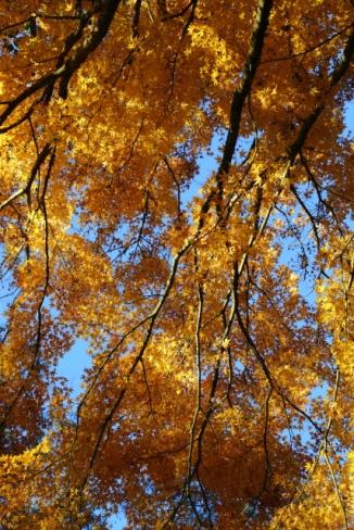 Autumn Leaves 2AM-008172