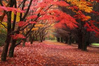 Autumn-Leaves-2AM-008205