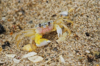 Ghost Crab 2AM-009873