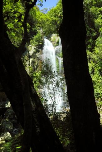Minnamurra Falls 2AM-007179