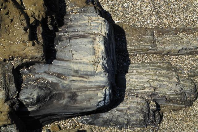 Petrified Forest - Curio Bay 2AM-000634