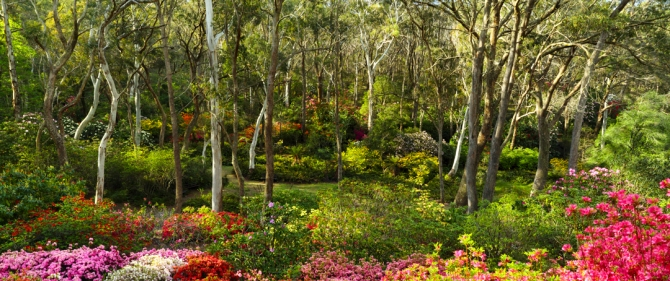 campbell-rhododendron-gardens-2am-6831-6832-panorama_edit