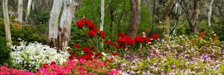 campbell-rhododendron-gardens-2am-6845-6847-panorama_edit