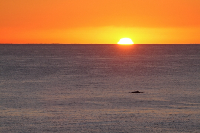 humpback-sunrise-2am-007774