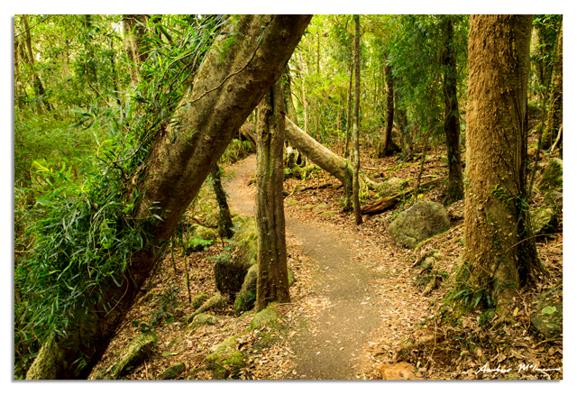 Best of all Lookout', Springbrook National Park – the Scenic